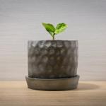 鉢植えのオリーブ・ルッカの育て方や手入れ方法のコツとは?