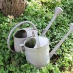 挿し木のオリーブへの水やり方法や量、適切な頻度とは?
