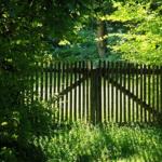 オリーブの地植えのやり方(方法)や適切な間隔とは?