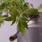 オリーブの木の幹に虫食いが?害虫の種類と対策方法とは?