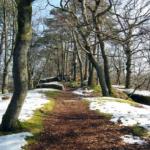 地植えのオリーブの雪対策方法とは?