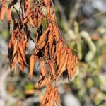 オリーブの害虫、ゾウムシに適切な殺虫剤とは?