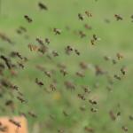 オリーブの花粉を受粉させるのに適切な時期とは?