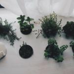オリーブは栽培におすすめ?育てやすい品種とは?