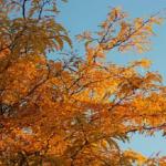 オリーブが枯れやすい時期はいつ頃の季節?対策は?