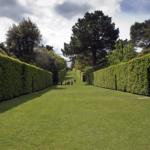 オリーブの生け垣に適切な植え付け間隔とは?