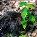 オリーブの栽培に適切な土壌のphとは?
