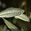 オリーブ 葉 枯れる 原因
