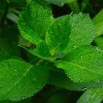 真夏のオリーブへの水やり頻度はどれくらいが適切?