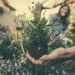植え替え後にオリーブが枯れる?原因や対処方法とは?