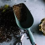 オリーブを植えている土の入れ替え方法とは?