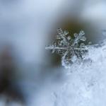 冬場のオリーブへの水やり頻度はどれくらいが適切?